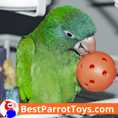 Parrot toys for our little friends - why do they really need them