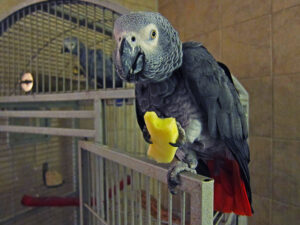 what do parrots eat