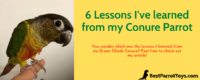 Lessons Learned from Conure Parrot