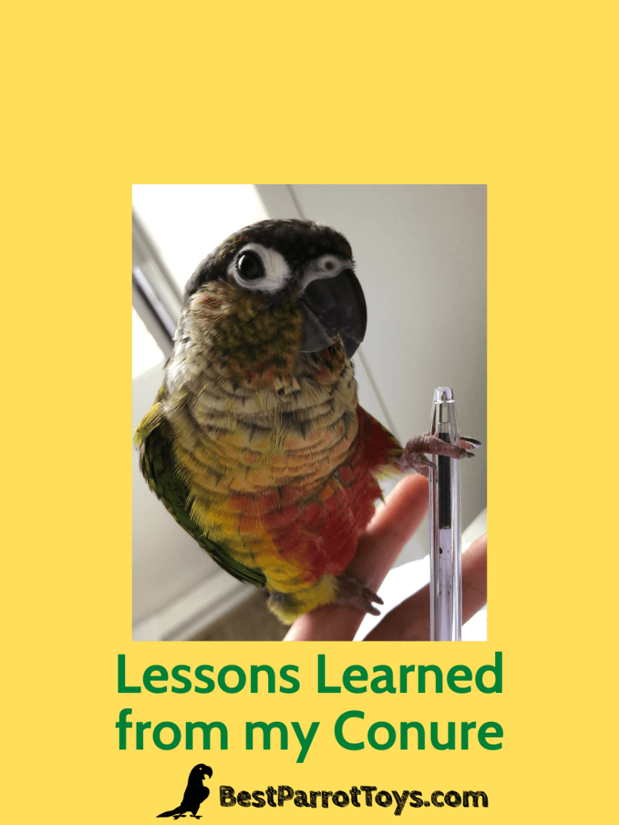 Lessons Learned from my Conure
