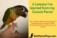 Lessons learned from my Conure Parrot