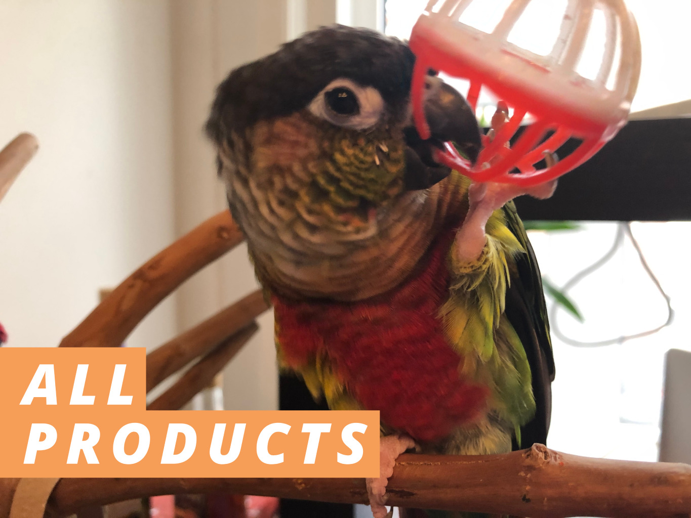 ALL PRODUCTS BANNER