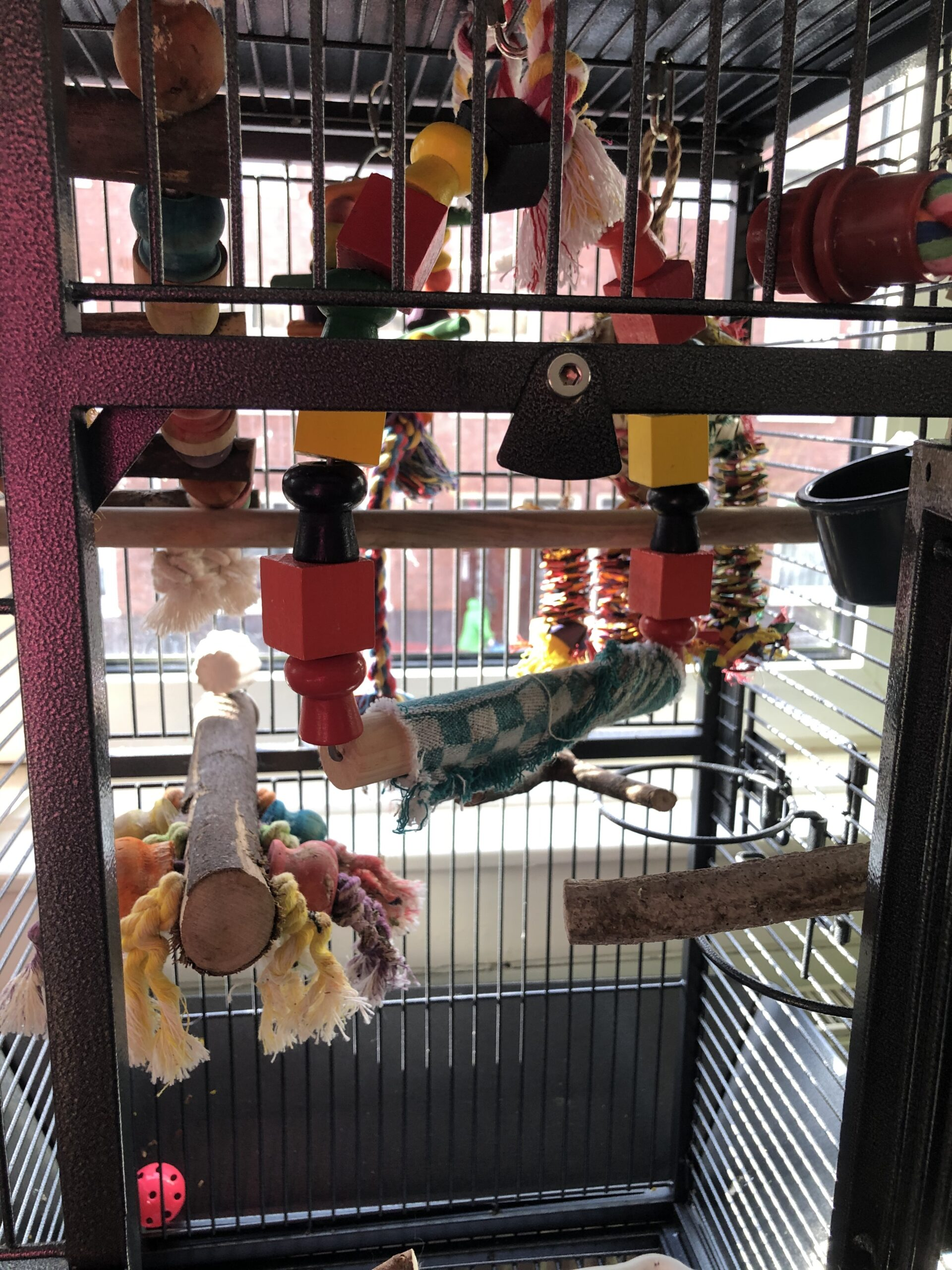 Parrot bird cage inside view