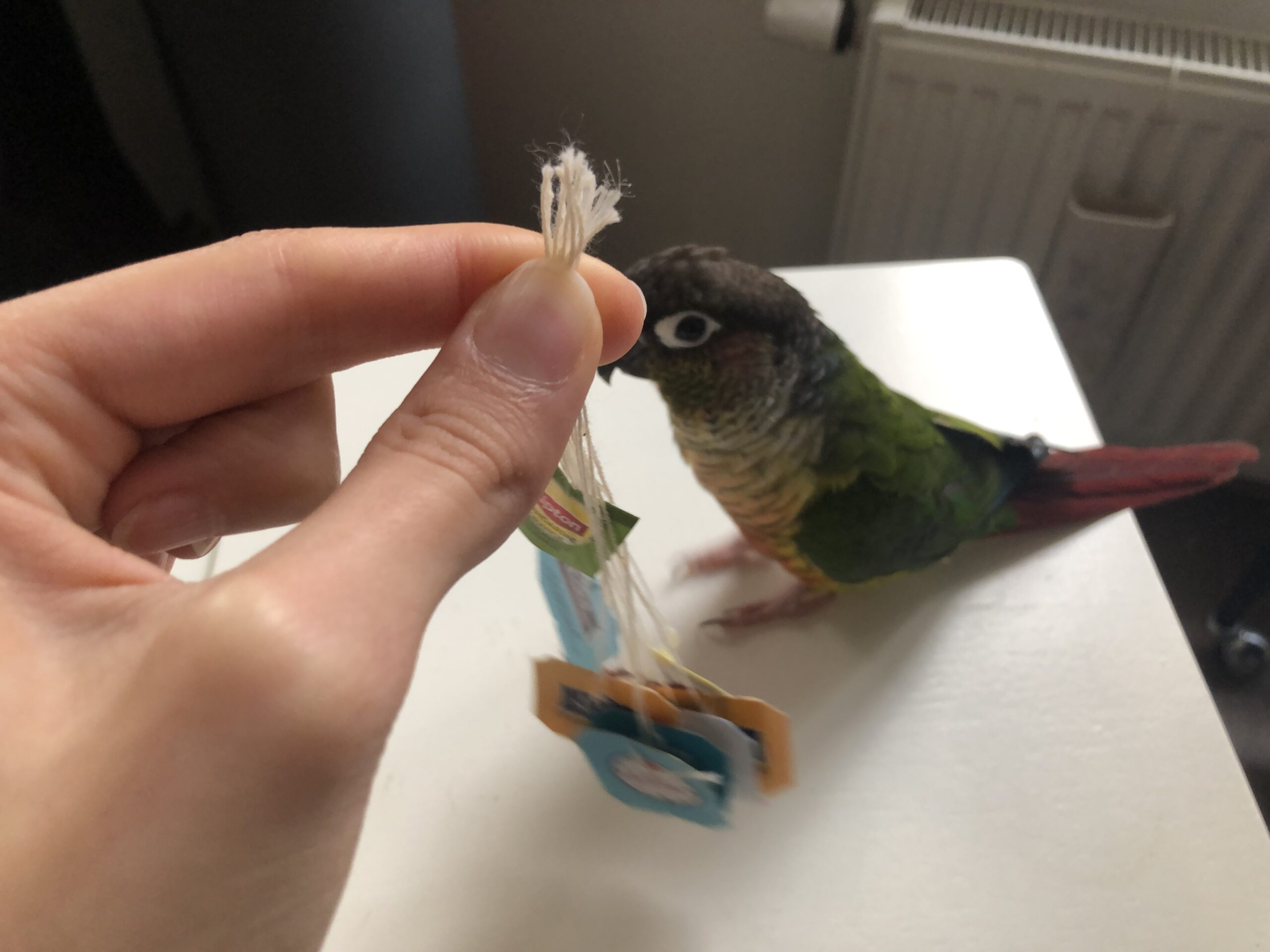 DIY Parrot Toys: Tea bag strings and paper labels