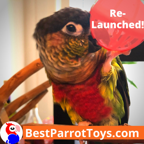 Best Parrot Toys is now relaunched