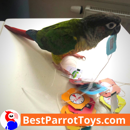 DIY Parrot Toys: Tea bag strings and paper labels