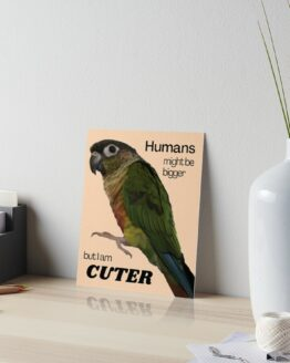 Green Cheek Conure design