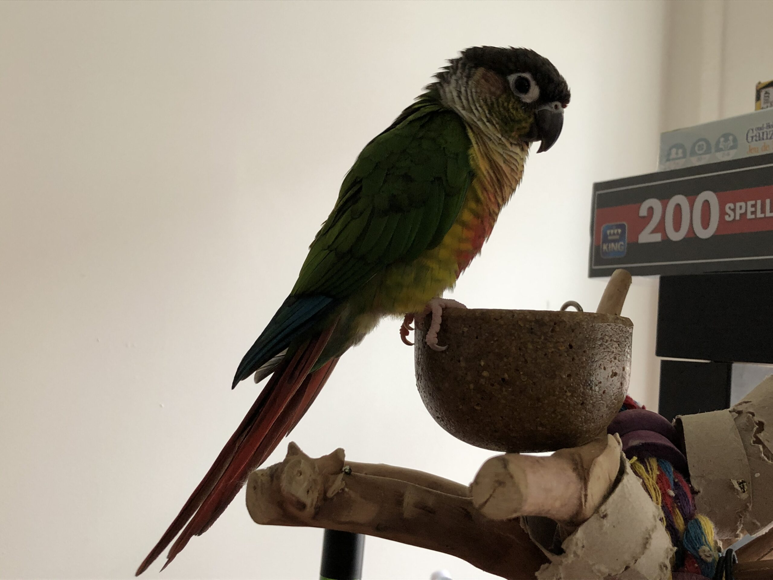 Java Tree Parrot Playstand