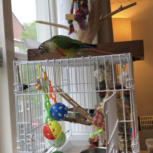 Parrot playing on travel cage