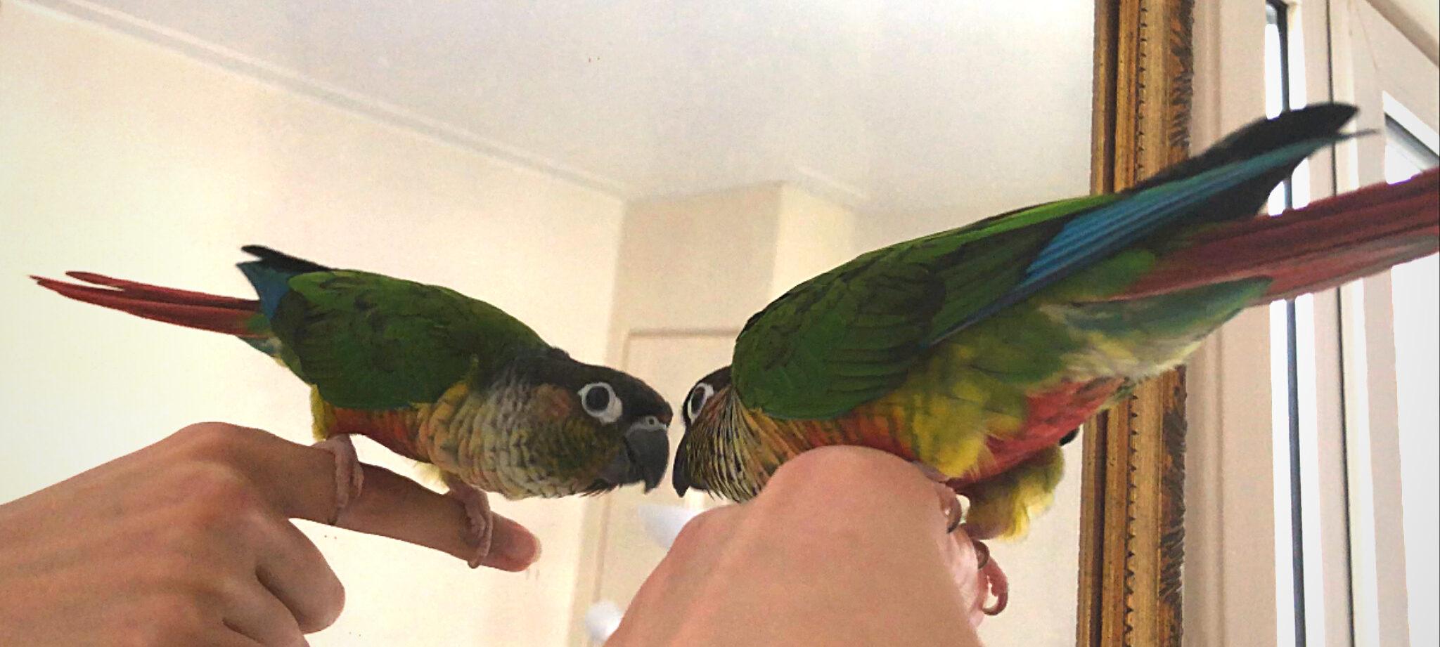 Best Parrot Toys