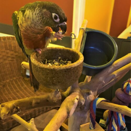 Bird on Holidays having a Treat