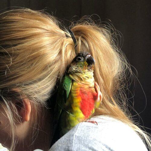 Parrot Enjoying the Vacation Sun