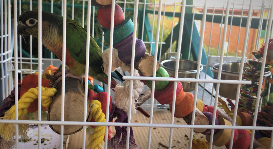 Bird ladders perches in travel cage