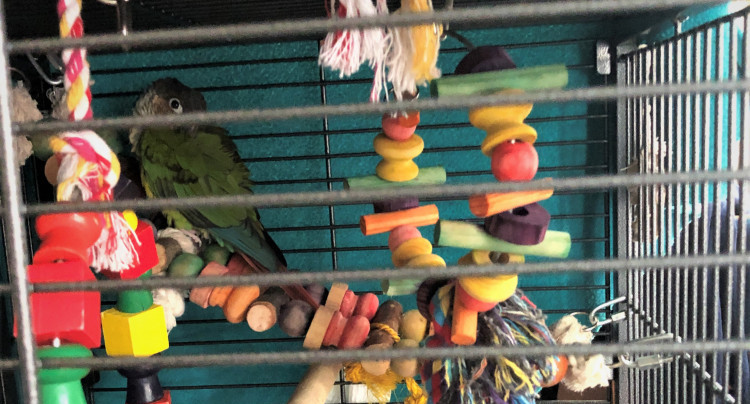 Bird ladders perches sleeping