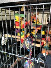 Chill Parakeet Swing