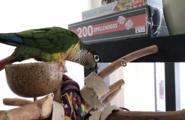 Green Cheek Conure Toys