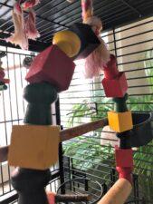 Additional step Parakeet Swing