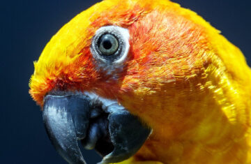 How to choose the right holiday pet hotel for your pet bird parrot