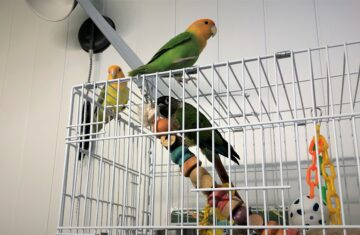 Our conure at the Holiday Pet Hotel
