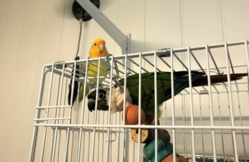 Our parrot at the Holiday Pet Hotel