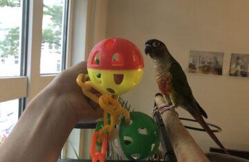 Best PET PARROT Toys